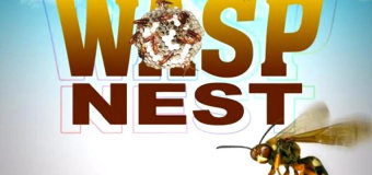 WASP NEST RIDDIM [FULL PROMO] – YUNG BLOOD & CASHFLOW RECORDS