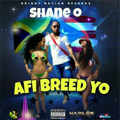 Shane-O-Afi-Breed-Yo